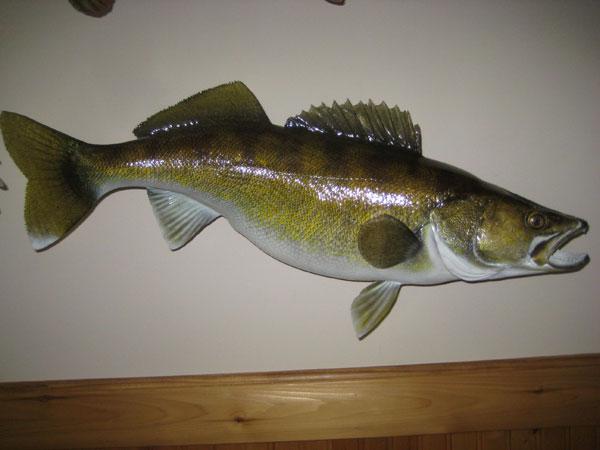 Fish Replicas, Graphite Fish Replicas Minnesota